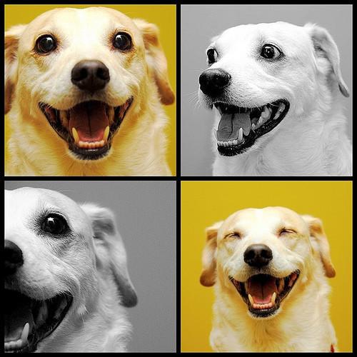 動物の気持ちが読める!何か言いたそうな動物の画像の数々!!の画像(35枚目)