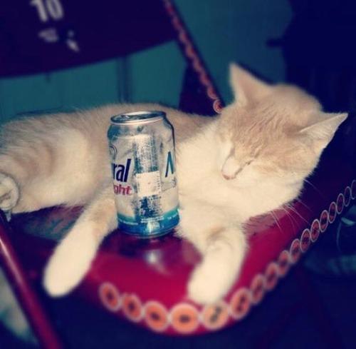 お酒大好き?お酒が好きそうな動物の画像の数々!!の画像(8枚目)