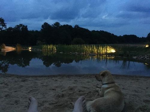 巨大な池の画像(36枚目)