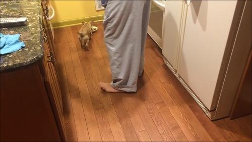 相棒の近くに器を移動して食べる犬1