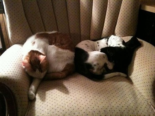 可愛く眠っている動物達の画像(11枚目)