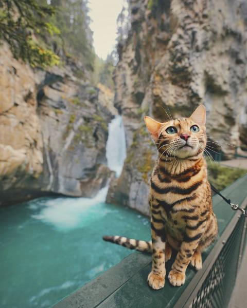 美しい風景と猫の画像(24枚目)
