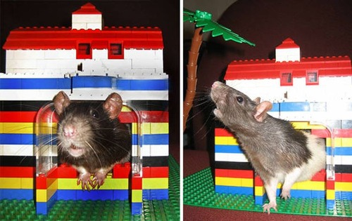 レゴで作った日用品の画像(13枚目)