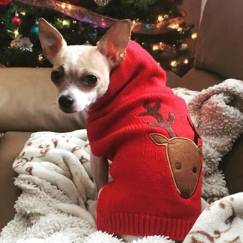 クリスマスのコスプレをした動物達の画像(5枚目)