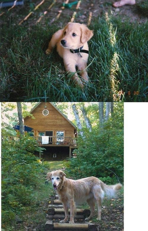 犬や猫の最初に撮った写真と最後に撮った写真の数々の画像(13枚目)