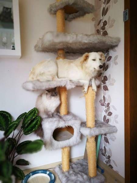 猫と勘違いをしている犬の画像(4枚目)