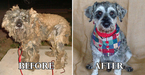 捨て犬の毛をキレイにカットしてるビフォーアフターの画像の数々!!の画像(7枚目)
