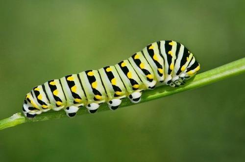 怪しすぎる見た目の昆虫の画像(11枚目)