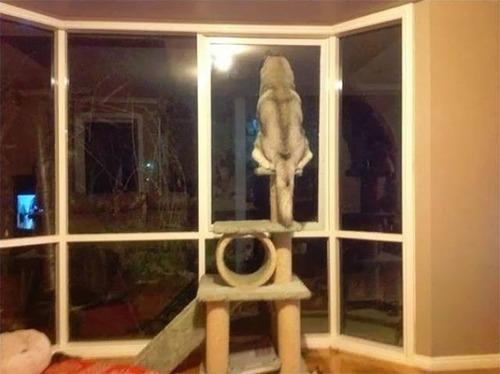 猫と勘違いをしている犬の画像(1枚目)