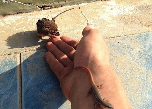 プールに落ちた動物を救うアイテムの画像(3枚目)