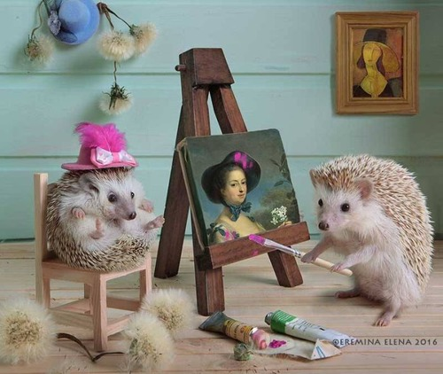 secret_world_of_hedgehogs_06