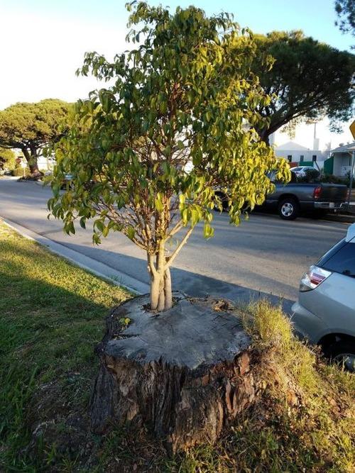 生えている樹木の画像(14枚目)