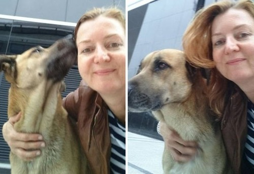 スチュワーデスさんに拾われた犬の画像(4枚目)