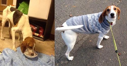 ホッとする!ノラ犬の飼主が見つかるビフォーアフターの比較画像!!の画像(13枚目)