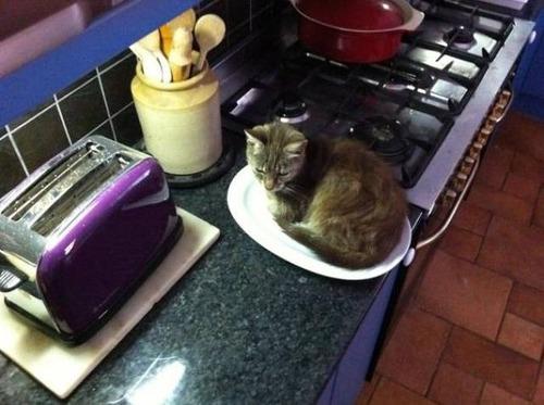 にゃんとも言えない、ちょっと困った猫の画像の数々!!の画像(1枚目)