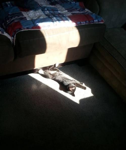 神々しい猫の画像(24枚目)