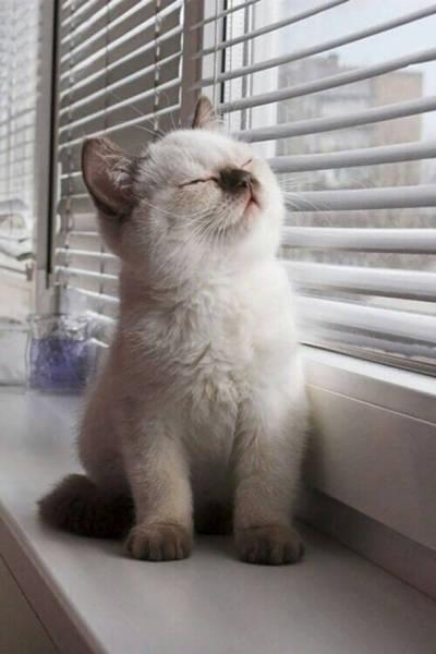 神々しい猫の画像(39枚目)