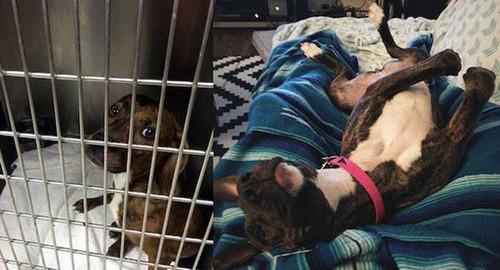 捨犬の時と良い飼主が見つかった時のワンちゃんのほのぼの比較画像の数々!!の画像(13枚目)
