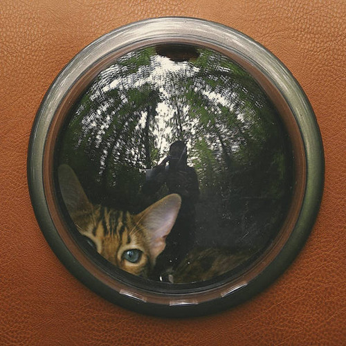 美しい風景と猫の画像(23枚目)