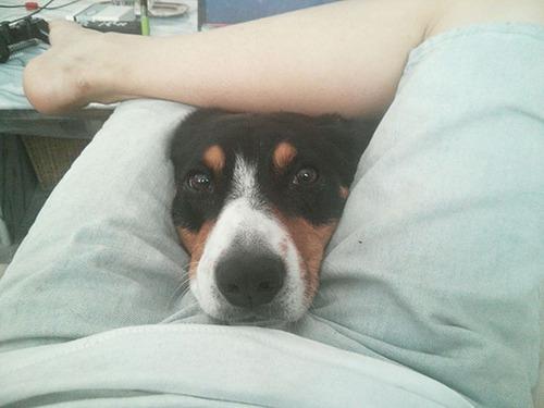 犬は可愛いけど、かなりジャマな感じの犬の画像の数々!!の画像(25枚目)