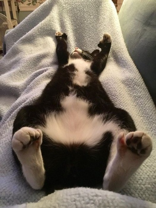 可愛く眠っている動物達の画像(17枚目)