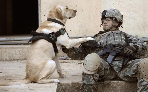 辛くても癒される!軍用犬でほのぼのしている写真の数々!!の画像(1枚目)