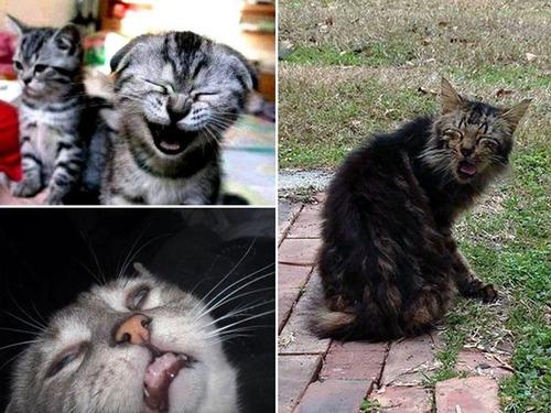 凶悪そうな猫の画像(14枚目)