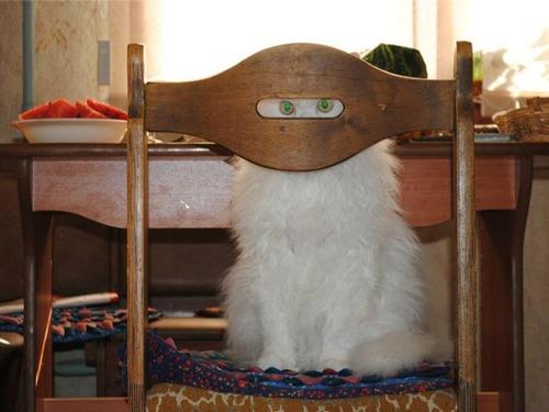 隠れているつもりの猫の画像(14枚目)