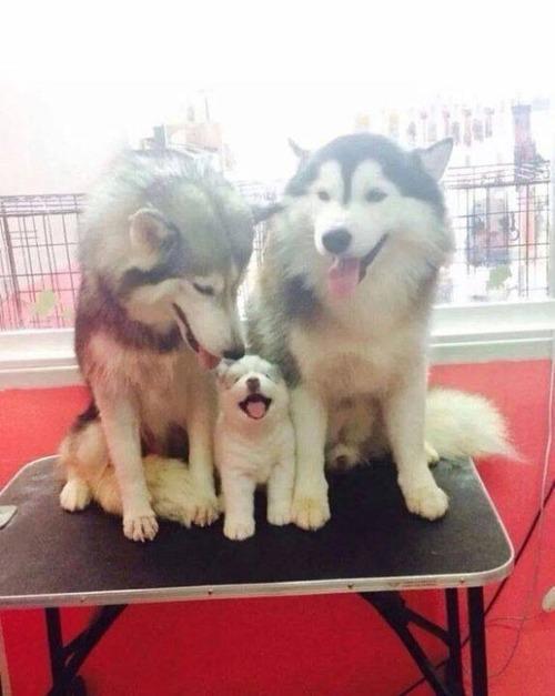 かわい過ぎる子犬の画像の数々!の画像(95枚目)