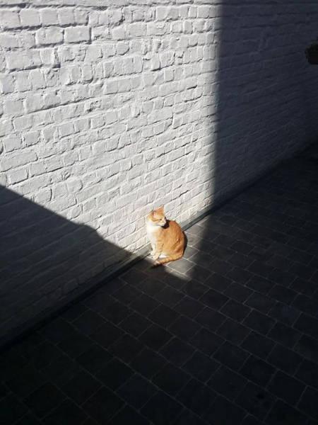 神々しい猫の画像(34枚目)