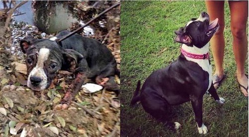 捨犬の時と良い飼主が見つかった時のワンちゃんのほのぼの比較画像の数々!!の画像(16枚目)