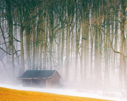 森の中の隠れ家の画像(36枚目)