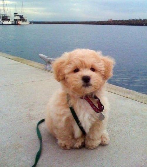 かわい過ぎる子犬の画像の数々!の画像(2枚目)