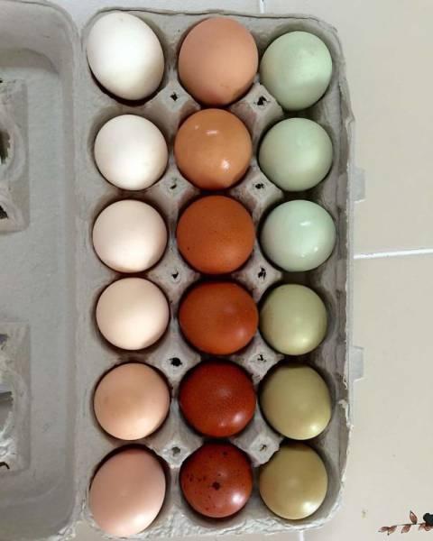 色や形が完璧に整った食べ物の画像(28枚目)