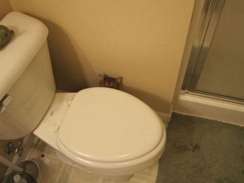 獲物を狙うかわいいネコの画像(9枚目)