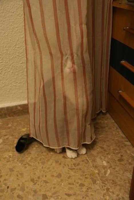 獲物を狙うかわいいネコの画像(3枚目)