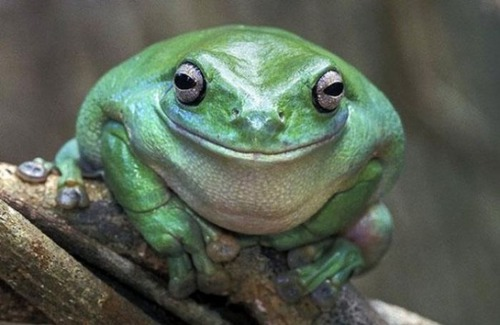 幸せそうな表情の動物達の画像(21枚目)