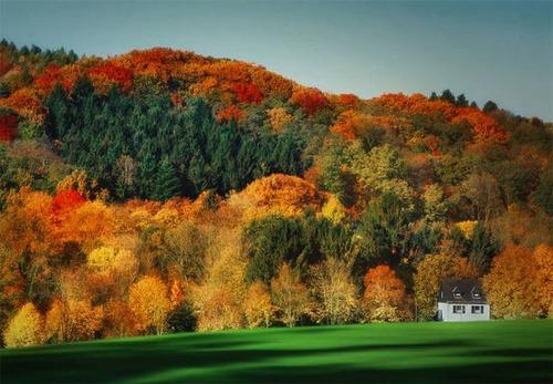 森の中の隠れ家の画像(37枚目)