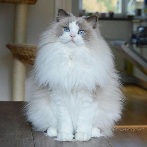 かわい過ぎる猫ちゃんの画像(15枚目)