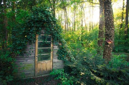 森の中の隠れ家の画像(27枚目)
