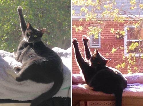 神々しい猫の画像(33枚目)