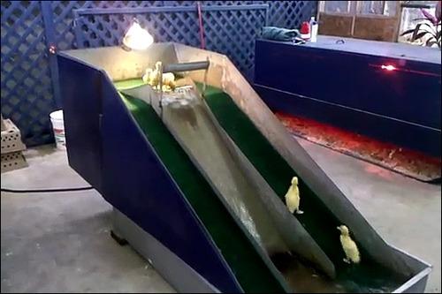 子供のアヒル用の滑り台の画像_000002006