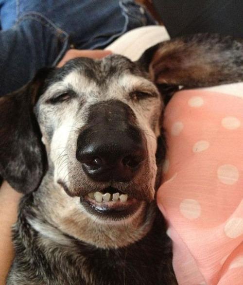 子犬が眠っているの画像(20枚目)