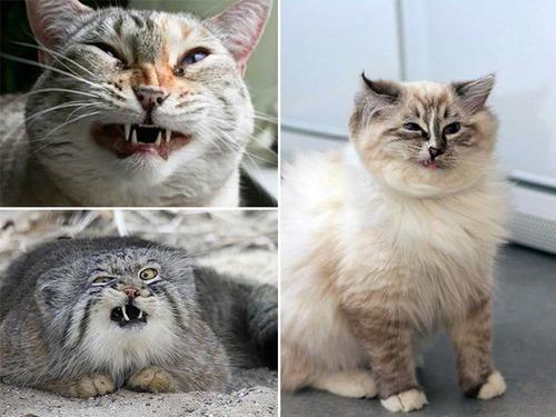 凶悪そうな猫の画像(16枚目)
