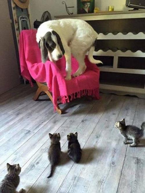 猫と犬の力関係の画像(2枚目)