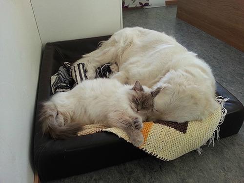 ほのぼのする!仲の良い犬と猫の画像の数々!!の画像(12枚目)