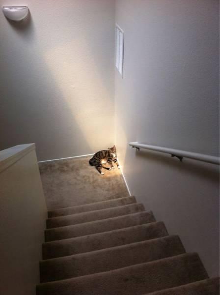 神々しい猫の画像(6枚目)