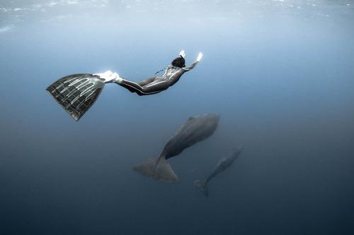 【画像】マッコウクジラといっしょに泳ぐダイバーの写真の画像(13枚目)