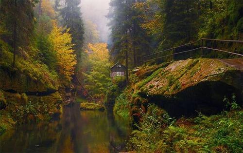 森の中の隠れ家の画像(24枚目)