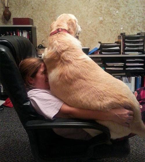 巨大な犬の画像(7枚目)